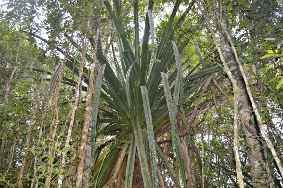 El Parque contiene un denso bosque húmedo