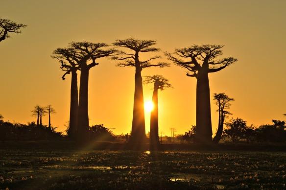 baobabs-madagsacar