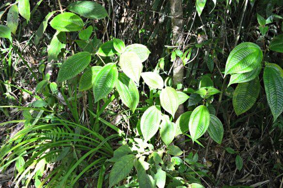 Además de su uso higiénico, esta planta también tiene poderes curativos